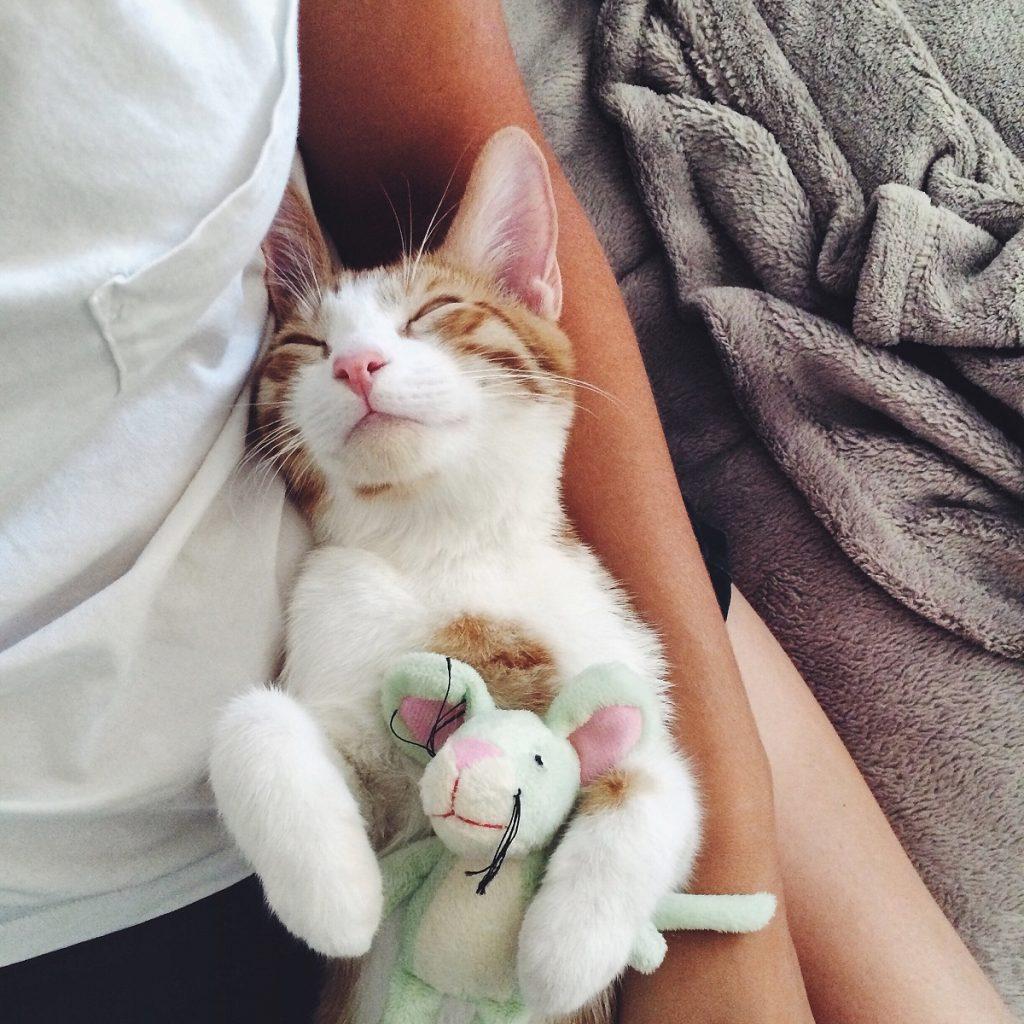 A kitten sleeping on a woman's arm