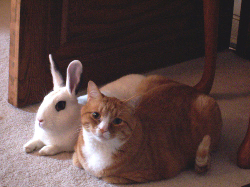 Bunny and kitty chilling together