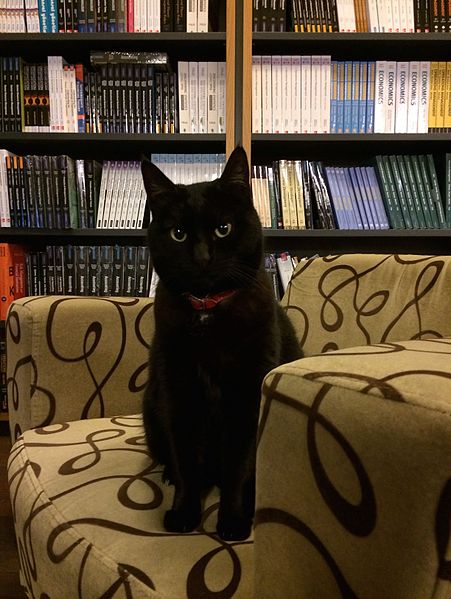 Cute black cat sits on a sofa in a library.
