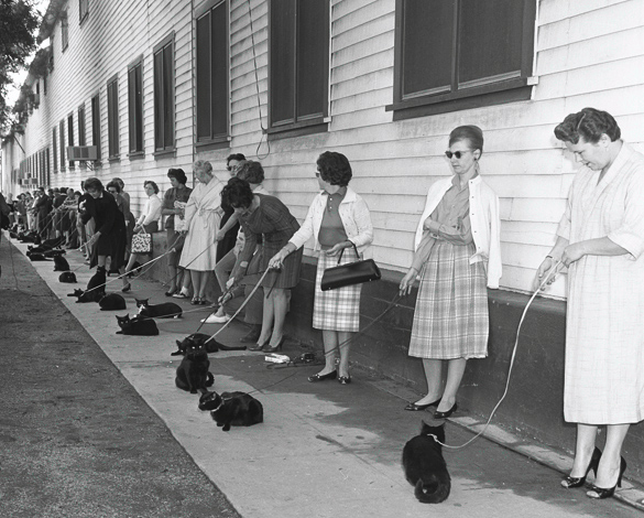 Cats and their owners attend a Hollywood black cat casting call in 1961.