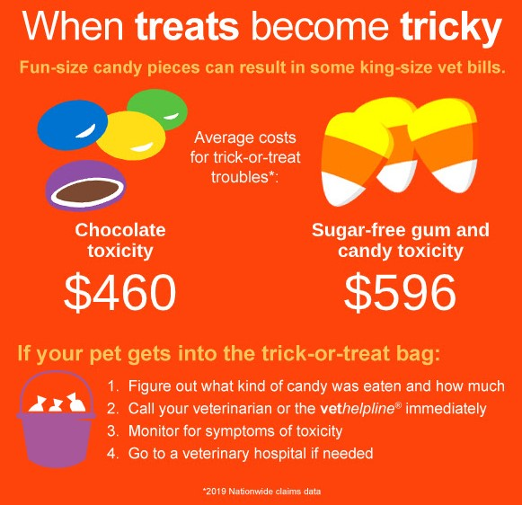 Chocolate and sugar-free candy is dangerous for cats.