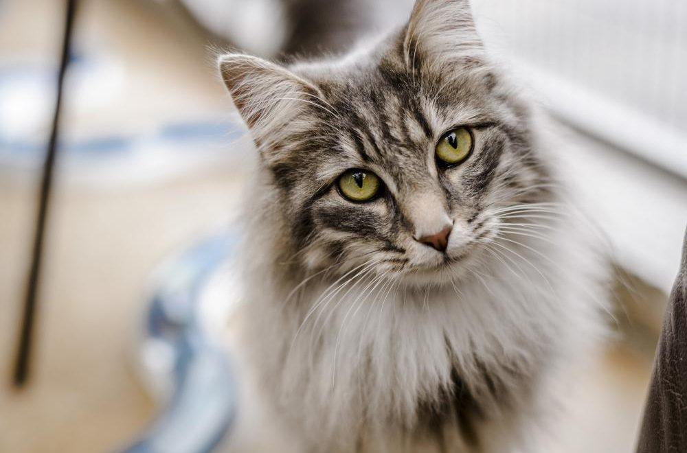 November is National Adopt a Senior Pet Month